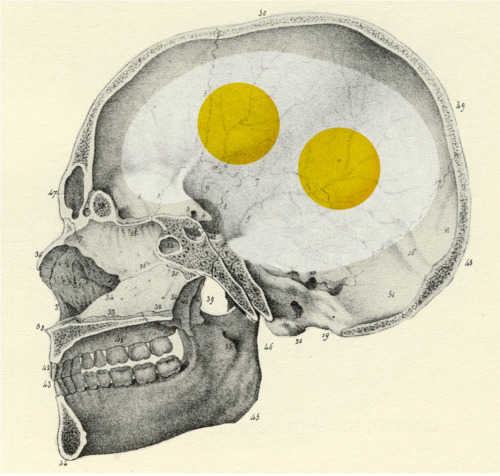 This is your brain on eggs.